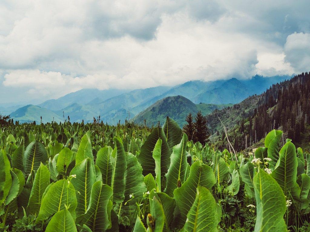 Hiken in Kazachstan: De 5 mooiste bergtochten nabij Almaty Hiken in Kazachstan: De 5 mooiste bergtochten nabij Almaty