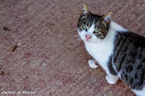 Myti the sneezing cat