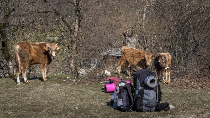 Hitchhiking in Georgia - Journal of Nomads