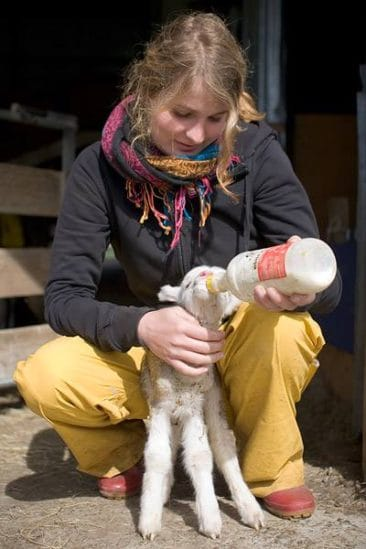 How to volunteer abroad for free - Journal of Nomads - sheep farm - New Zealand
