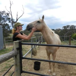 How to volunteer abroad for free - Journal of Nomads - horse farm - Australia