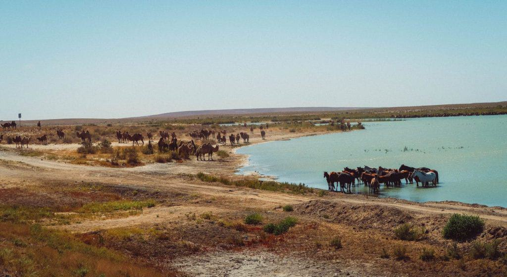 waterhole steppes Kazakhstan camels horses