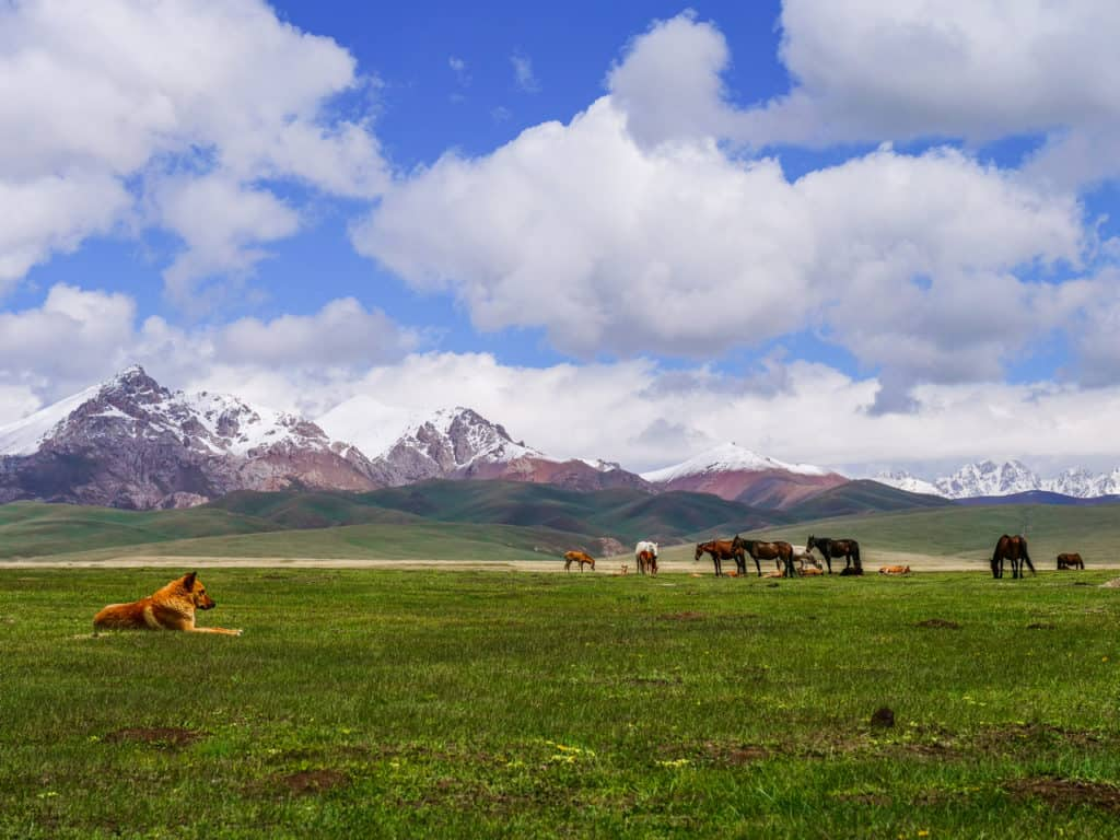 Sights of Kyrgyzstan: nature, historical places, culture 99