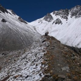 An Ultimate Guide to Trekking in North Tian Shan, Kazakhstan - Journal of Nomads