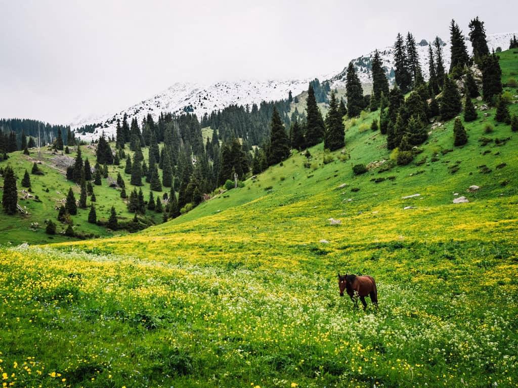 Hiking in Almaty - Kok Zhailau - Journal of Nomads