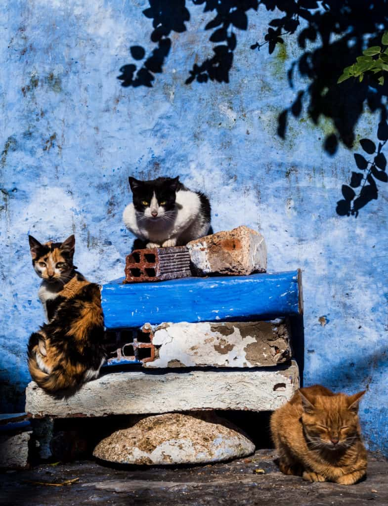 Things to do in and around Chefchaouen, the Blue City of Morocco - streets of Chefchaouen - Get lost in the streets of Chefchaouen - cats in Chefchaouen - Journal of Nomads