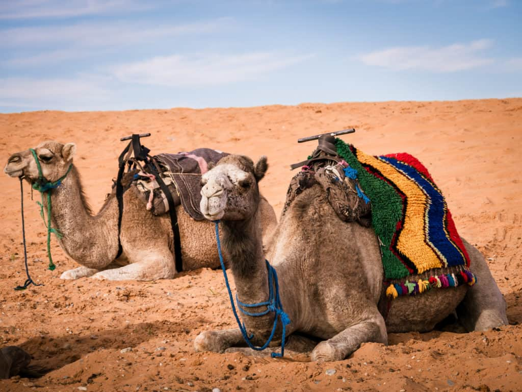 How to plan a desert trip to Merzouga and other fun things to do in the Sahara, Morocco. - Journal of Nomads - camel trip in Sahara