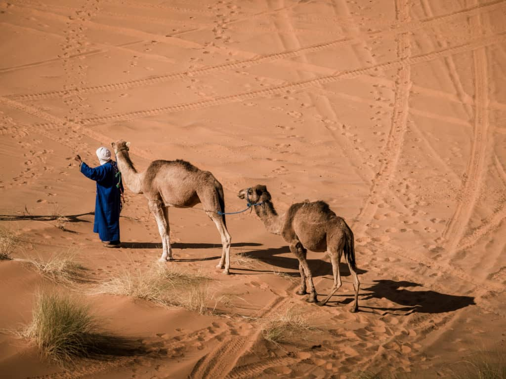 How to plan a desert trip to Merzouga and other fun things to do in the Sahara, Morocco. - Journal of Nomads - camels in Morocco