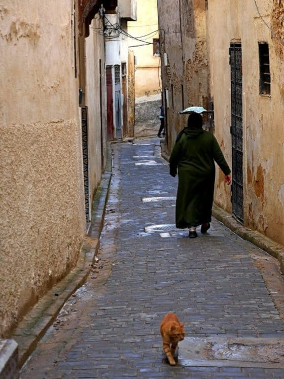Streets of Fez Morocco - Journal of Nomads