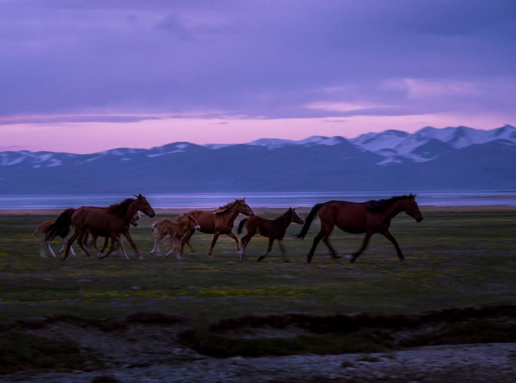 Horses running freely in Kyrgyzstan - Journal of Nomads