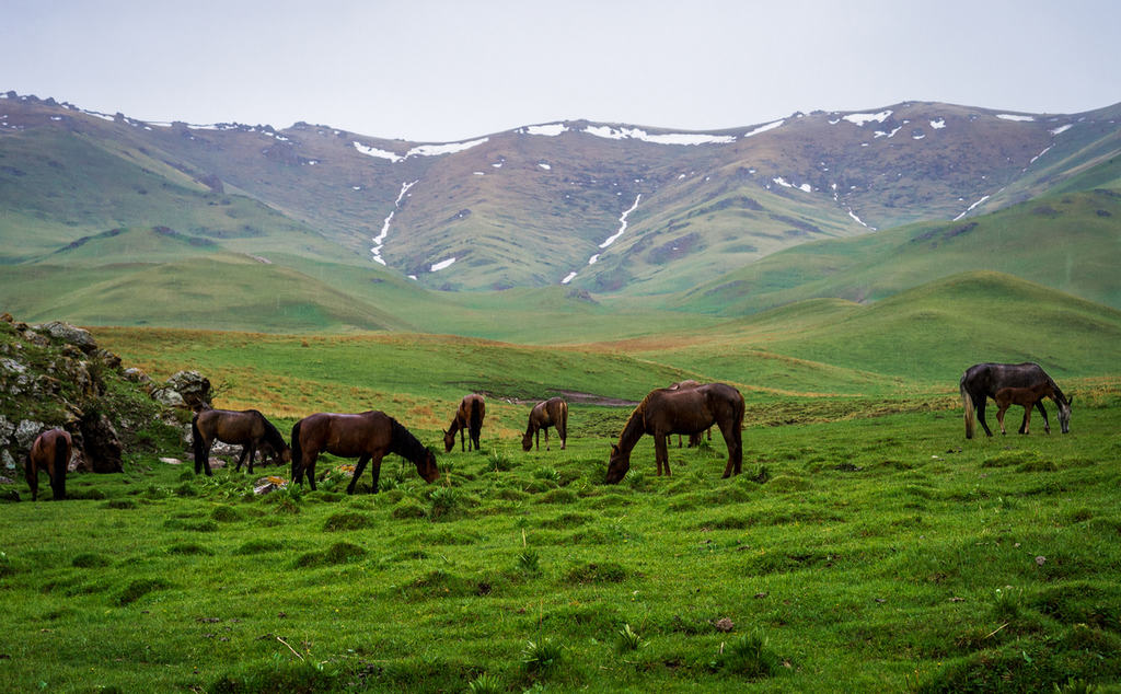 Lumix G9 - Weather Sealed Camera - Horses Kyrgyzstan - Journal of Nomads