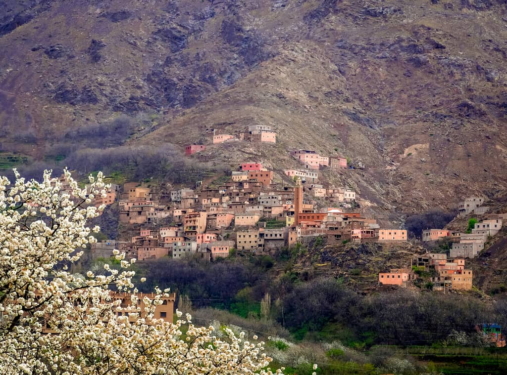 blossoming trees near Imlil and toubkal - nature near toubkal - imlil morocco - journal of nomads