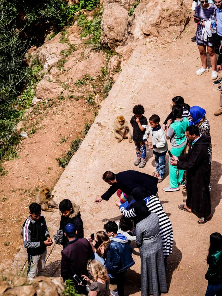 feeding monkeys at ouzoud waterfalls - Barbary macaques - Journal of nomads