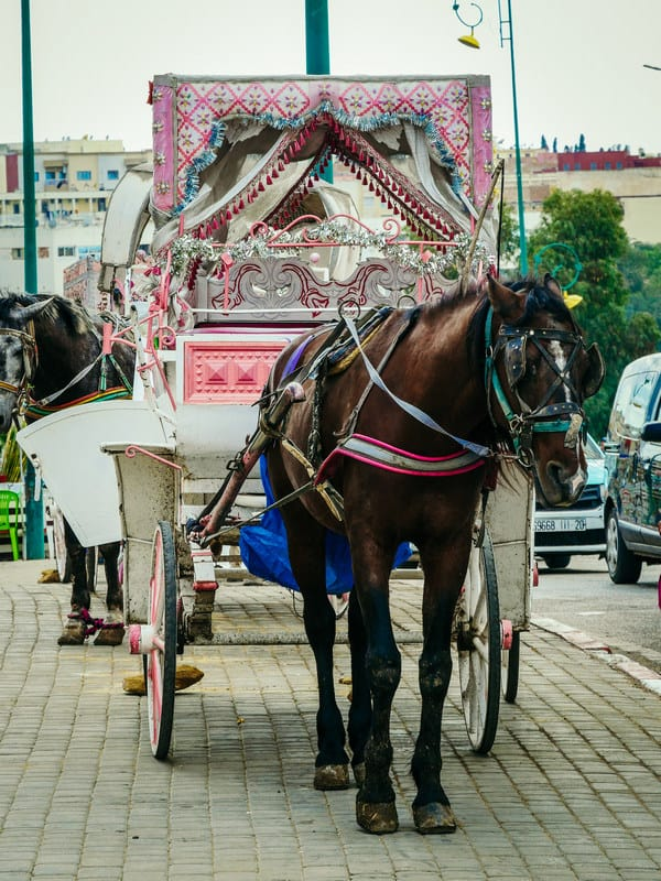 horse carriage Meknes Morocco - journal of nomads