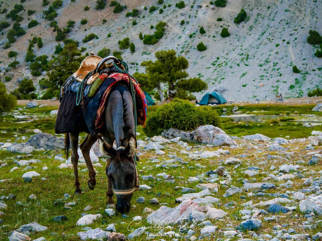 Donkeys in Tajikistan