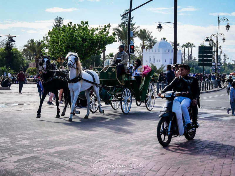 horse carriage Marrakech