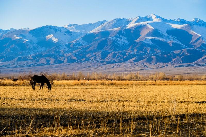 Kyrgyzstan in winter - landscapes of Kyrgyzstan - horses of Kyrgyzstan